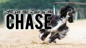 All for the Love of the Chase - Louise Harding - Animal Talent
