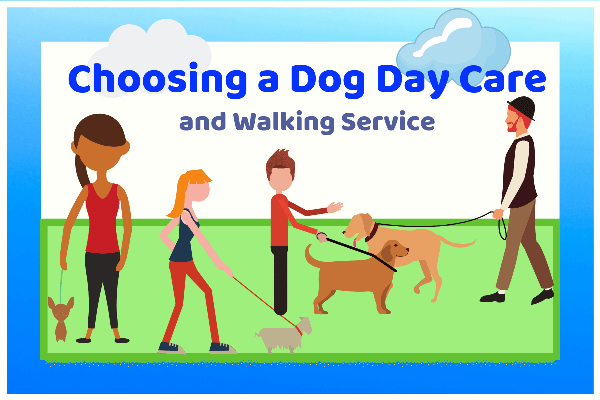 Choosing a Dog Day Care