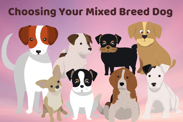 Choosing Your Mixed Breed Dog